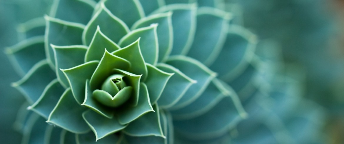 beautiful_plant-wallpaper-1280x768-1170x490.jpg
